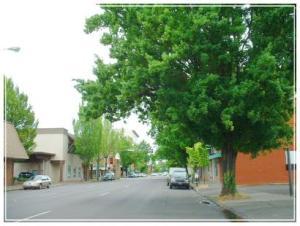 Trees on Street